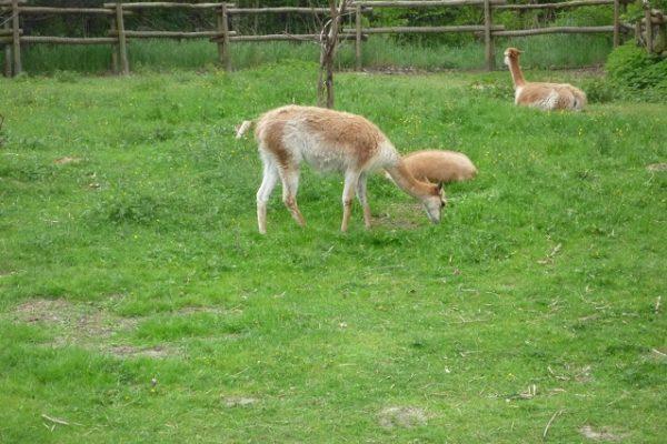 zoologico (1)