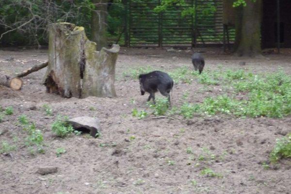 zoologico (4)