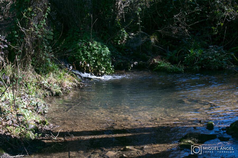 Bosque de Fangorn, Bejarano, Baños de Popea y Fuente del Elefante